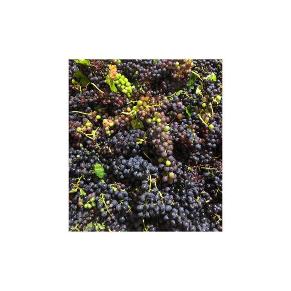 Kleinood Farm Tamboerskloof Wines